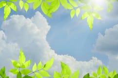 与结束蓝天的自然绿色背景 免版税库存照片