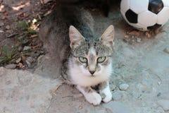 与绿松石眼睛的可爱的猫 免版税库存图片