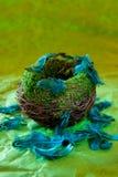 与绿松石羽毛的空的巢 免版税库存照片