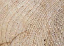 与结构树环形的云杉的木头 库存图片