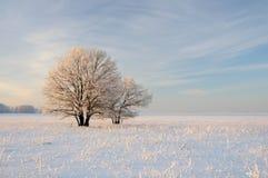 与结构树的冬天横向 免版税库存照片
