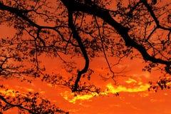 与结构树的日落 免版税库存照片