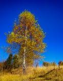 与结构树的横向 免版税库存图片