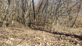 与结构树的秋天横向 库存图片
