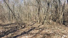 与结构树的秋天横向 免版税库存照片