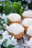 与黄油奶油和春天白花的杯形蛋糕 免版税库存图片