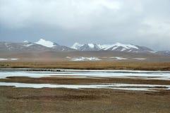 与冻湖的牦牛 免版税库存照片