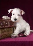 与玻璃和书的美丽的小狗 免版税库存照片