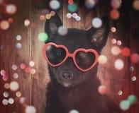 与玻璃和闪闪发光的逗人喜爱的党小狗 免版税库存照片