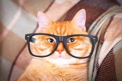 与玻璃特写镜头的逗人喜爱的红色猫 库存照片