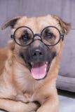 与玻璃的狗 免版税库存照片