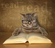与玻璃的聪明的猫读一本书 免版税库存照片