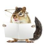 与玻璃阅读书的滑稽的动物花栗鼠 库存图片