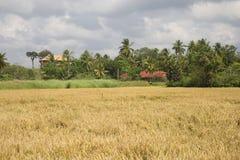 与稻田的农村风景 图库摄影
