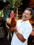 与他的冠军雄鸡巴厘岛的骄傲的所有者 免版税库存图片