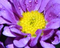 与水滴的印象深刻的花在宏观看法 免版税库存照片