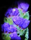 与水滴的印象深刻的花在宏观看法 图库摄影