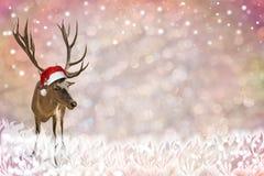 与轻的圈子、雪剥落和驯鹿的欢乐背景 库存图片