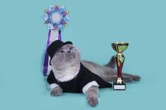 与他们的奖的重要苏格兰猫在backgrou 免版税图库摄影