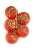 与水滴的新鲜的蕃茄  库存图片