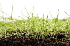 与水滴的新鲜的绿草在阳光下 库存照片