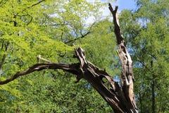 与死的树的森林地场面 库存照片