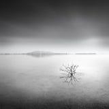 与死的植物和反射的湖视图 免版税库存图片