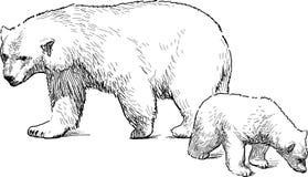 与崽的白熊 库存图片