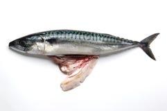 与他的胆量的鲭鱼 免版税库存图片