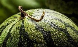 与水滴的西瓜  免版税库存图片