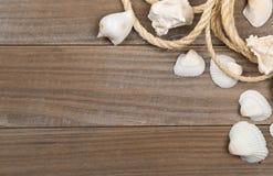 与绳索的贝壳在棕色木板 库存图片