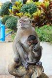 与崽的猴子 免版税库存照片