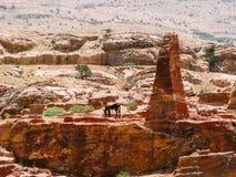 与驴的Petra 库存照片