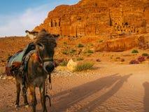 与驴的Petra 免版税库存图片