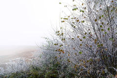 与去年秋天叶子的淡褐在光秃的分支的灌木和霜 免版税库存照片