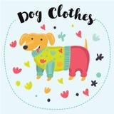 与滑稽的动画片长的达克斯猎犬狗的无缝的样式在五颜六色的衣裳穿戴了 向量例证