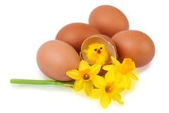 与滑稽的小鸡的复活节彩蛋装饰 免版税图库摄影