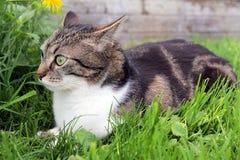 与滑稽的神色的一只小的猫 库存照片