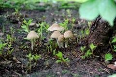 与滑稽的面孔的狂放的蘑菇 免版税库存照片