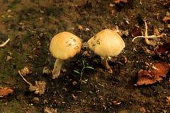 与滑稽的面孔的狂放的蘑菇 免版税库存图片