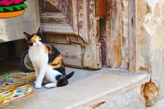 与贯穿的眼睛的古巴猫在门道入口坐 免版税图库摄影