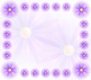 与紫罗兰色花的传染媒介背景 免版税图库摄影