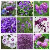 与紫罗兰色花的拼贴画 库存图片