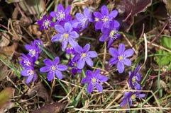 与紫罗兰色花的风景在背景中 库存图片