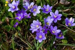 与紫罗兰色花的风景在背景中 免版税库存图片