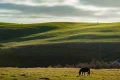 与绵羊和房子人群的绿色曲线领域,当接触光在多云天 免版税图库摄影