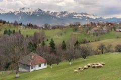 与绵羊的农村山风景 免版税图库摄影
