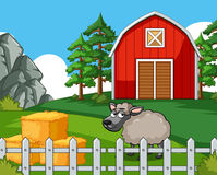 与绵羊的场面在农场 免版税库存照片