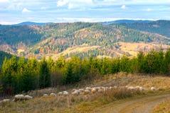 与绵羊的秋天风景 库存照片