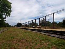 与绵羊的老火车站在智利的南部 免版税库存图片